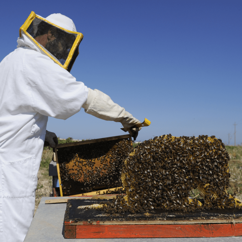 azienda agricola fratelli licari miele arnie 1